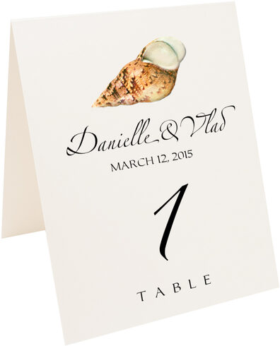 Photograph of Tented Seashell Assortment 02 Table Numbers