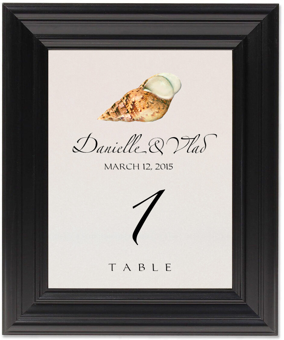 Framed Photograph of Seashell Assortment 02 Table Numbers