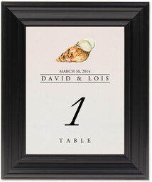 Framed Photograph of Seashell Assortment Table Numbers