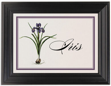 Framed Photograph of Iris Bulb Table Names