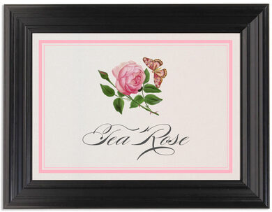 Framed Photograph of Pink Tea Rose Table Names
