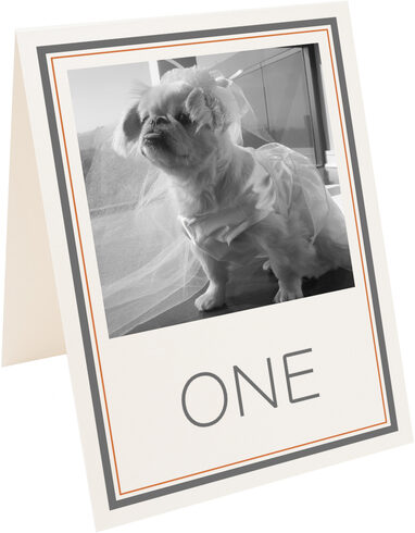 Photograph of Tented Simple Affair Photography Table Numbers