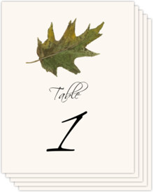 Colorful Leaves Assortment 02 Autumn and Fall Leaves Table Numbers