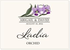 Orchid Assortment