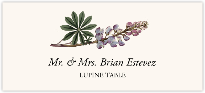 Lupine  Place Cards