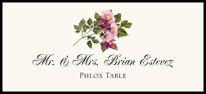 Phlox  Place Cards