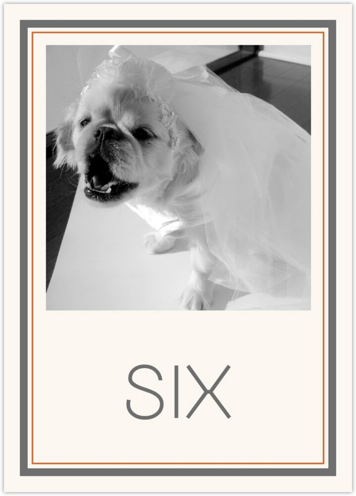 Simple Affair Photography  Table Numbers