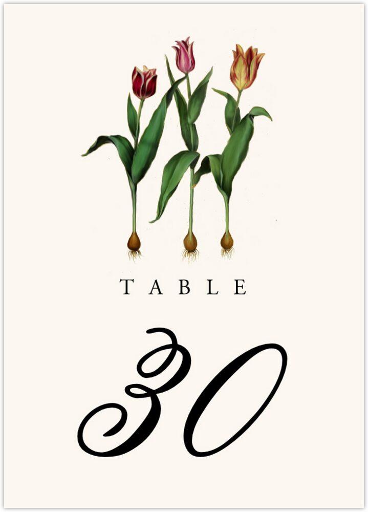 Tulip Bulbs  Table Numbers