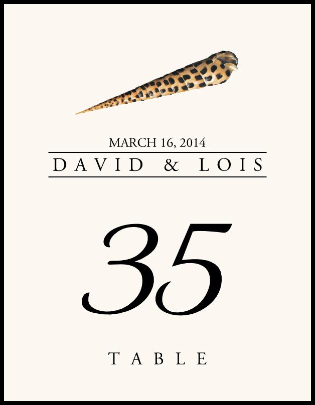 Seashell Assortment  Table Numbers