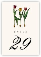 Tulip Bulbs Table Numbers