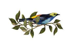Birds and Butterflies Blue Bird 01 Artwork