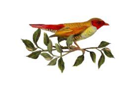 Birds and Butterflies Red Bird 01 Artwork