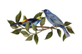 Birds and Butterflies Two Blue Birds Artwork