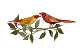 Birds and Butterflies Two Red Birds Artwork