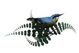 Birds and Butterflies Loopie Artwork