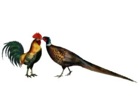 Birds and Butterflies Rooster and Pheasant Artwork