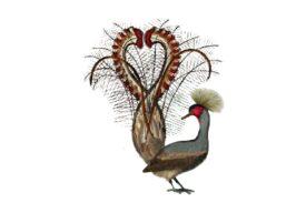 Birds and Butterflies Pheasant Artwork