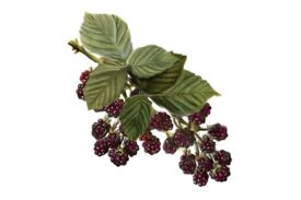 Spring Flowers, Autumn Leaves, Grapes Blackberries 02 Artwork