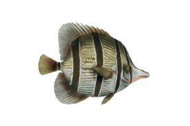 Seashells, Fish, and Beach Bottlenose Artwork