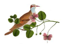 Birds and Butterflies Brown Bird 03 Artwork