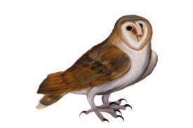 Birds and Butterflies Brown Owl 01 Artwork