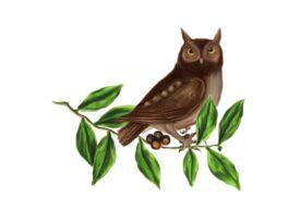 Birds and Butterflies Brown Owl 02 Artwork