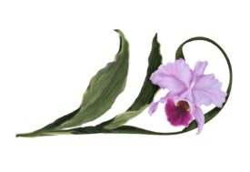 Spring Flowers, Autumn Leaves, Grapes Cattleya Orchid Artwork