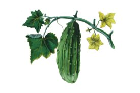 Spring Flowers, Autumn Leaves, Grapes Cucumber Artwork