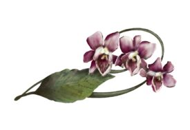 Spring Flowers, Autumn Leaves, Grapes Cymbidium Orchid Artwork