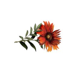 Spring Flowers, Autumn Leaves, Grapes Gerbera Daisy (orange) Artwork