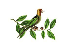 Birds and Butterflies Green Parrot Artwork