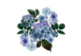 Spring Flowers, Autumn Leaves, Grapes Hydrangea (blue) Flower Painting Illustration Artwork