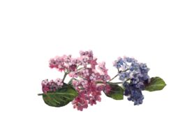 Spring Flowers, Autumn Leaves, Grapes Hydrangea Sprig (pink & blue) Flower Painting Illustration Artwork