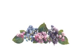 Spring Flowers, Autumn Leaves, Grapes Hydrangeas Artwork