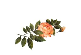 Spring Flowers, Autumn Leaves, Grapes Light Orange Rose Artwork