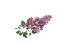 Spring Flowers, Autumn Leaves, Grapes Lilac Artwork