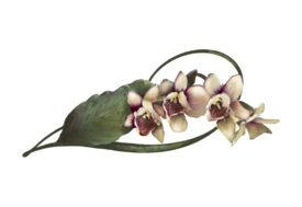 Spring Flowers, Autumn Leaves, Grapes Moth Orchid Artwork