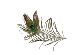 Birds and Butterflies Peacock Feather 01 Artwork