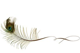 Birds and Butterflies Peacock Feather 03 Artwork