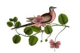 Birds and Butterflies Pink Pigeon Artwork
