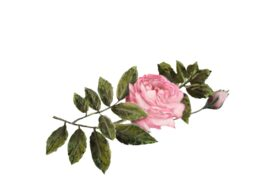 Spring Flowers, Autumn Leaves, Grapes Pink Rose Artwork