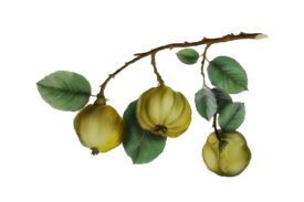Spring Flowers, Autumn Leaves, Grapes Quince Artwork