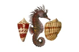 Seashells, Fish, and Beach Seahorse Pattern Artwork