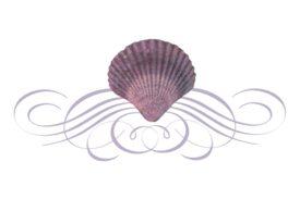 Seashells, Fish, and Beach Seashell Flourish 04 Artwork