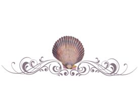 Seashells, Fish, and Beach Seashell Flourish 08 Artwork
