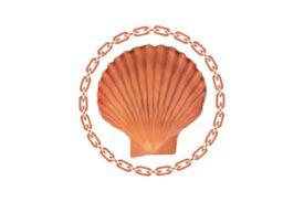 Seashells, Fish, and Beach Seashell Flourish 11 Artwork