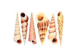 Seashells, Fish, and Beach Seashell Pattern 09 Artwork