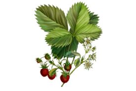 Spring Flowers, Autumn Leaves, Grapes Strawberries Artwork