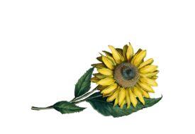 Spring Flowers, Autumn Leaves, Grapes Sunflower Artwork