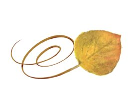 Spring Flowers, Autumn Leaves, Grapes Swirly Aspen Leaf Artwork